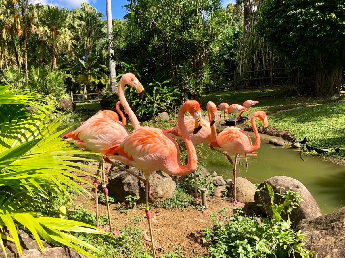 La Guadeloupe en famille : le Jardin botanique de Deshaies